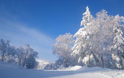 Powder Snow Hokkaido